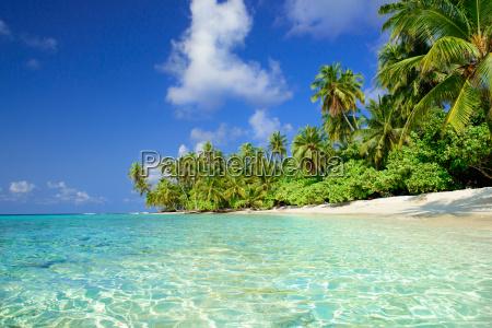 beach med palmer