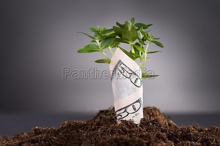 penge vokser fra jord