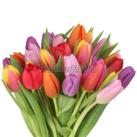 buket tulipaner blomster i foraret eller
