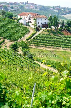 vinmarker og vingarde i piemonte