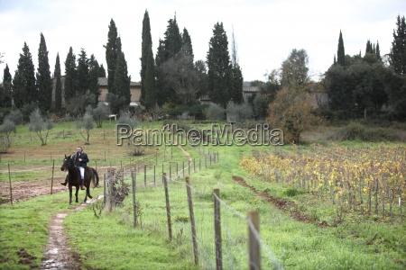 maend mand hest dyr europa horisontal