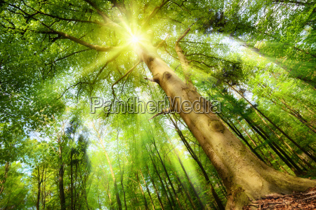 sun in the magic forest