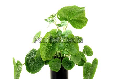 mad levnedsmiddel naeringsmiddel fodevare krydderi gron