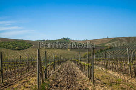 vinbjerge vingarde toscana landskab natur