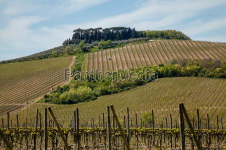 landbrug agerbrug vinbjerge vingarde