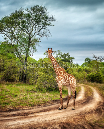 dyr pattedyr nationalpark afrika wildlife safari