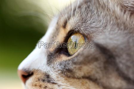 close cats eye