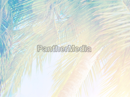 smukke tropiske baggrund