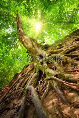forest scenery in beautiful sunshine