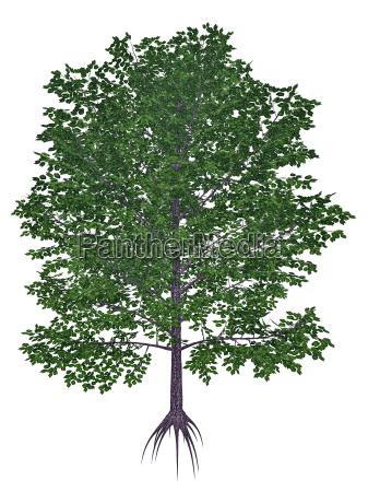 sod sort mahogni krydderi eller kirsebaer
