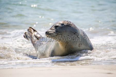 kegle taetning pa stranden i helgoland