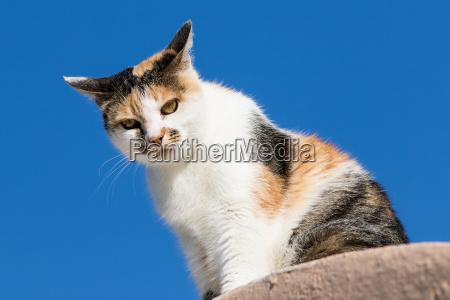 sidde kat huskat missekat mis
