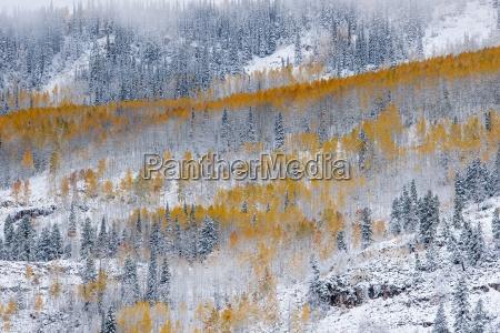 trae lovtrae usa horisontal frost frostvejr