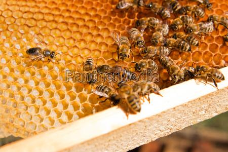 bier inde i en bikube med