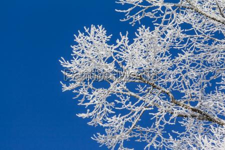 hvid vinter wonderland med bla himmel