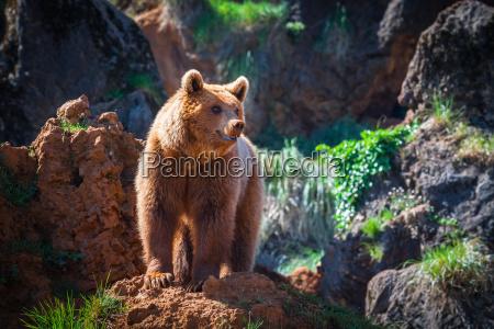 fare fritlagt bjerge park vinter dyr