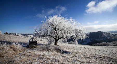 hoarfrost covered winter landscape