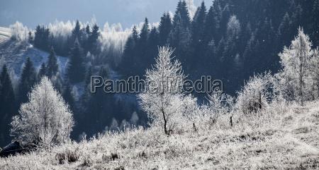 hoarfrost daekket vinterlandskab