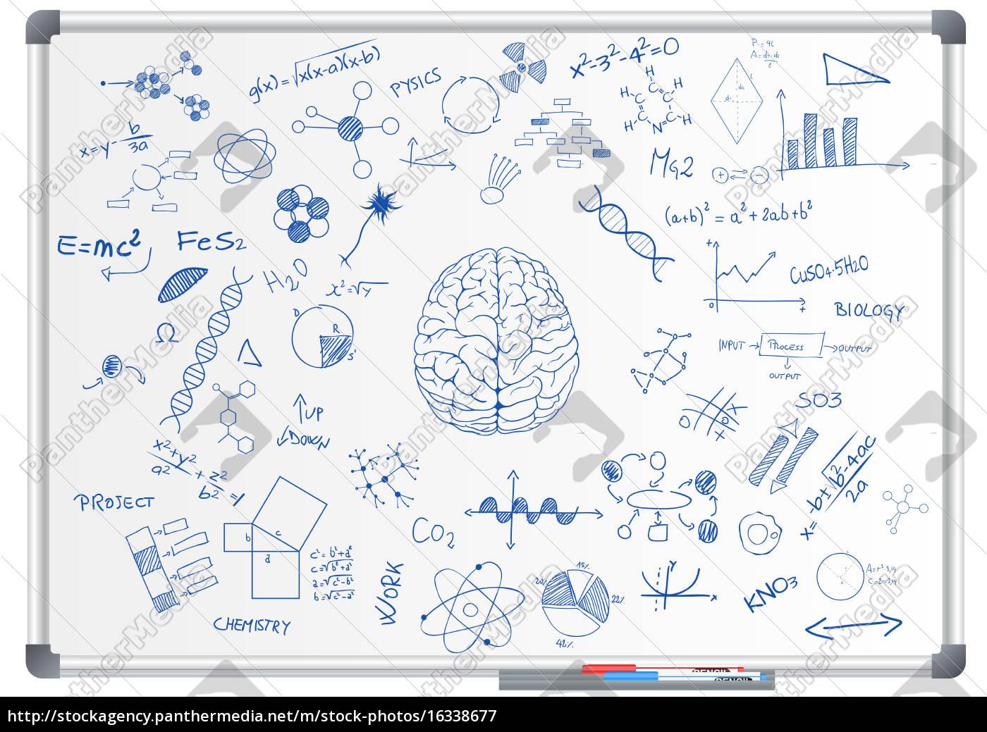 hjernevidenskab, tavle - 16338677