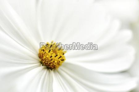 makrooptagelse naerbillede detalje farve closeup close