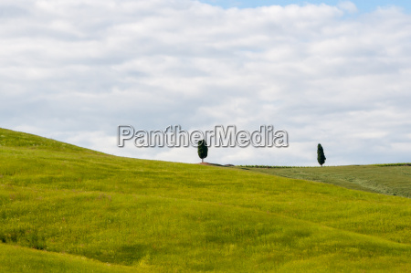 tuscan landscape with two cypresses