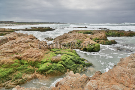 asilomar, state, beach, monterey, peninsula, det, centrale, californien - 16356751
