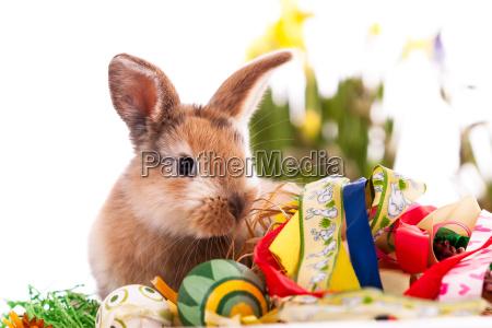farverig kanin med paskeaeg pa hvid