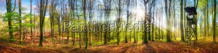 panorama over skov med solen i