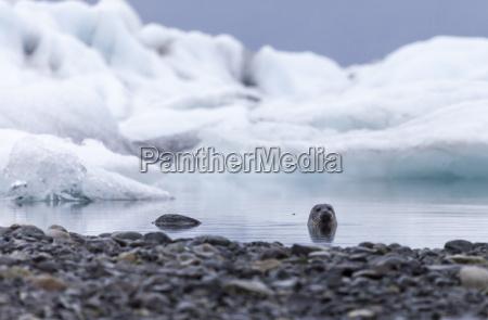 tur rejse dyr pattedyr refleksion kamera