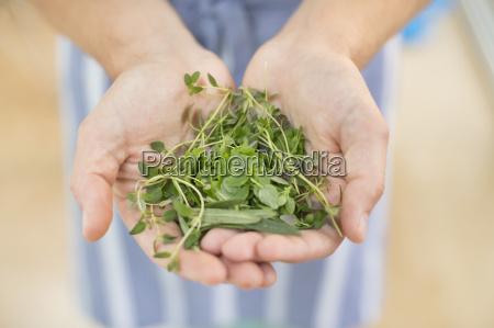 haender holder flok urter