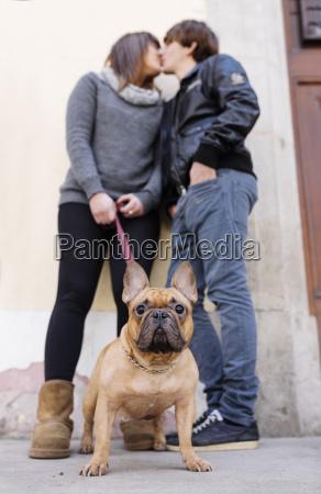 portraet af fransk bulldog med ejere