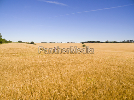 farmer standing in distance in sunny
