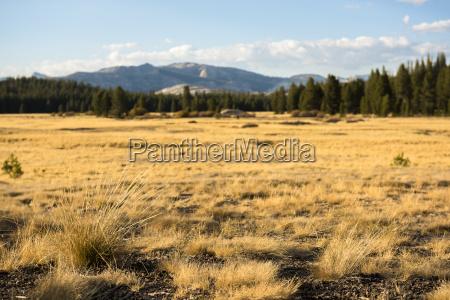udsigt over uberort landskab i tolumne