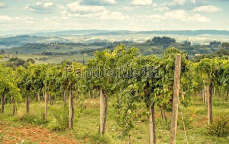 toscanske druer