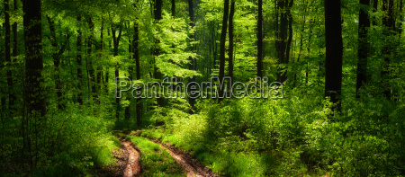 waldpanorama with a special lighting mood