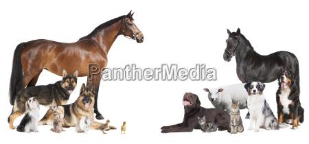 mange dyr collage