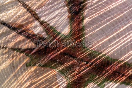 trae traestamme stamme abstrakt kerne kernel