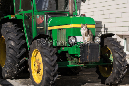 cat is sitting at the tractor