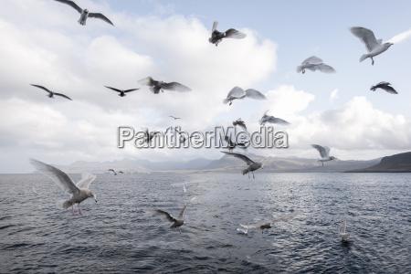 udendore udendors kyst wildlife efter dag