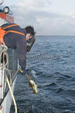 mandlig maskulin viril fisk udendore udendors
