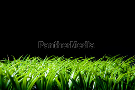 grass and black background