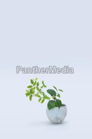 varieret staengler med gronne blade i