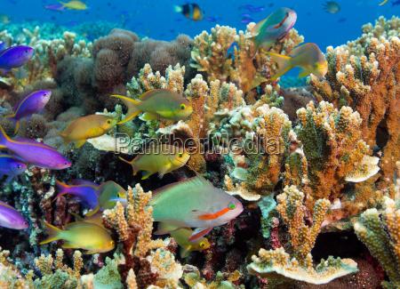 makrooptagelse naerbillede dyr fisk lilla udendore