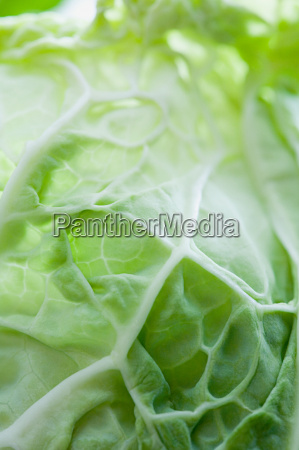 close, up, of, a, cabbage - 18760536