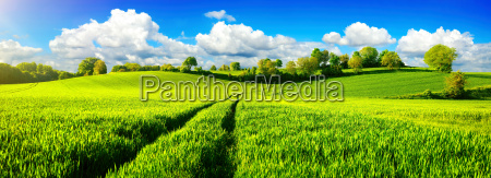 rural idyll panorama with wide green