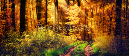 beautiful forest in autumn light rays