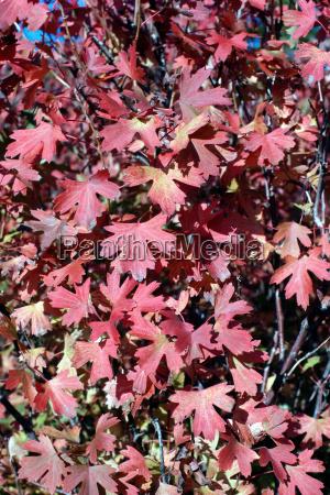 efterårsblade - 18815950