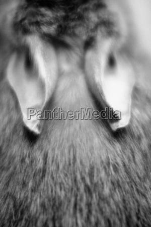 makrooptagelse naerbillede pels pelsfrakke pelskabe kanin