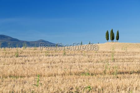 toscana cypres landskab natur italien