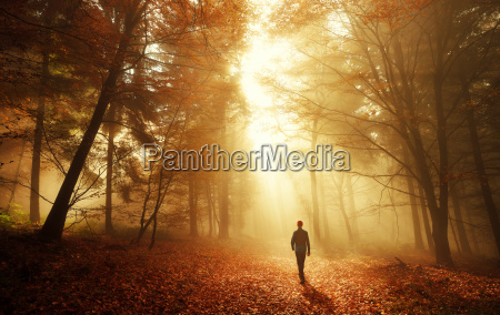 ga i skoven med fantastisk lyseffekt